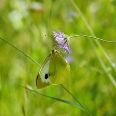 Le manager papillon ou les effets de la multi-activités